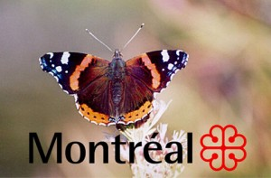 embleme-insecte-montreal