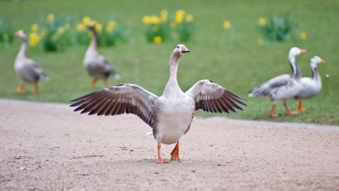 canada goose kensington codziennego