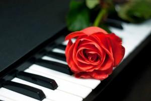 Walentynki-róża